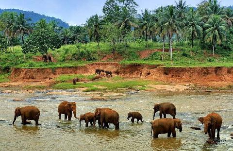 Азиатский банк развития предоставил Шри-Ланке кредит в 453 млн. долларов