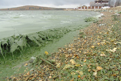 Источник водоснабжения Нижнего Тагила позеленел из-за химикатов водоканала