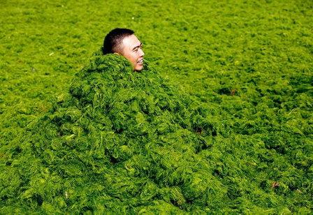 Минприроды не допустит промышленный вылов водорослей в границах заказника «Малые Курилы»