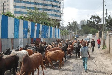 В Аддис-Абебе септики заменяют анаэробными перегородочными реакторами