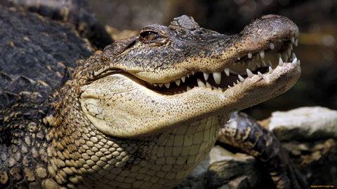 В подвальных водах Петербурга заметили взрослого крокодила