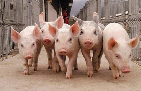 В Испании создано предприятие по производству систем очистки стоков от свиноводческих ферм