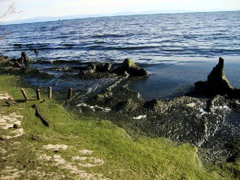 Минэкономразвития РФ выступило против продления программы по охране озера Байкал