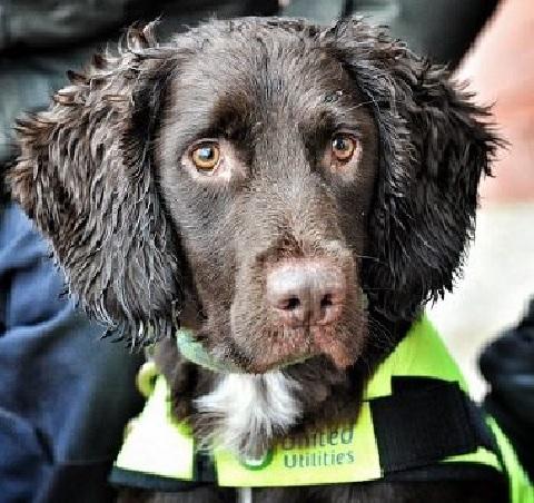 Британская компания приняла в штат собаку для определения утечек воды
