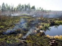 Германский банк развития KfW поддержит мероприятия по восстановлению торфяных болот на территории Рязанской области