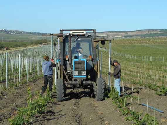 Очищенные канализационные стоки Балаклавы будут направлять на полив виноградников