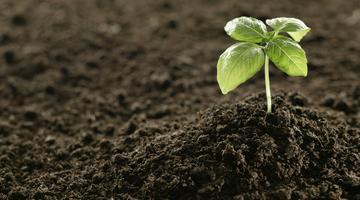 «ПКС-Водоканал» распродаёт садоводам грунт из переработанных стоков