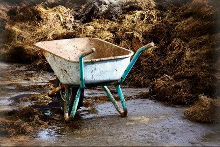 В систему водоснабжения в посёлке Иннолово под Петербургом попали навозные массы