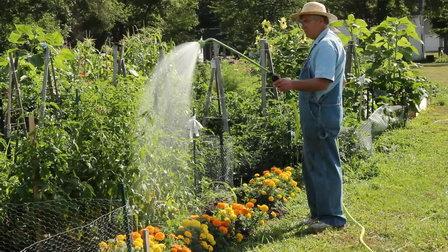 Жителей Армавира будут штрафовать за полив огородов в дневное время