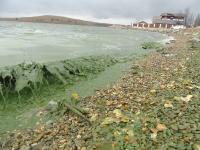 Проект реабилитации Черноисточинского пруда в Свердловской области разработают к марту 2019 г.