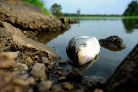 Елабужский городской суд оштрафовал чиновника департамента водоснабжения за массовый мор рыбы на реке