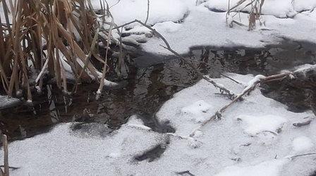 «Водоканал Санкт-Петербурга» ответит за загрязнение притока реки Славянки мыльными стоками
