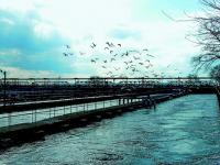 Новые биологические очистные сооружения построят в Волгограде за четыре года